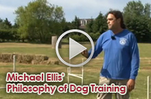 Featured Dog Training Video